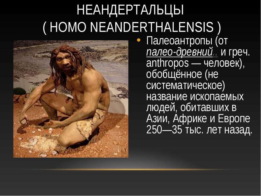 НЕАНДЕРТАЛЬЦЫ ( HOMO NEANDERTHALENSIS ) Палеоантропы (от палео-древний.. и гр...