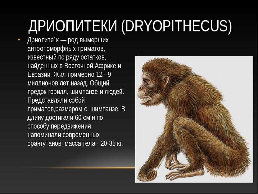 ДРИОПИТЕКИ (DRYOPITHECUS) Дриопите к — род вымерших антропоморфных приматов, ...