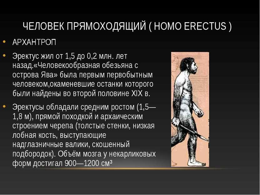 ЧЕЛОВЕК ПРЯМОХОДЯЩИЙ ( HOMO ERECTUS ) АРХАНТРОП Эректус жил от 1,5 до 0,2 млн...