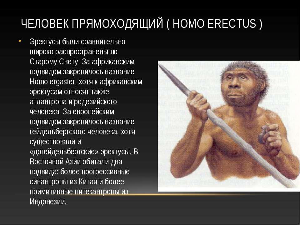 homo habilis - человек умелый по сравнению с австралопитеком человек умелый имел мелкие зубы