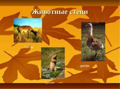 Животные степи сайгак дрофа суслик