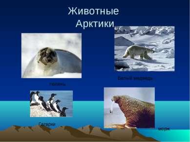Животные Арктики Гагарки Белый медведь морж тюлень