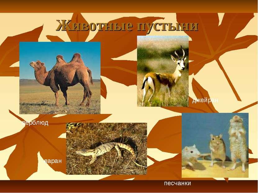 Животные пустыни верблюд джейран варан песчанки