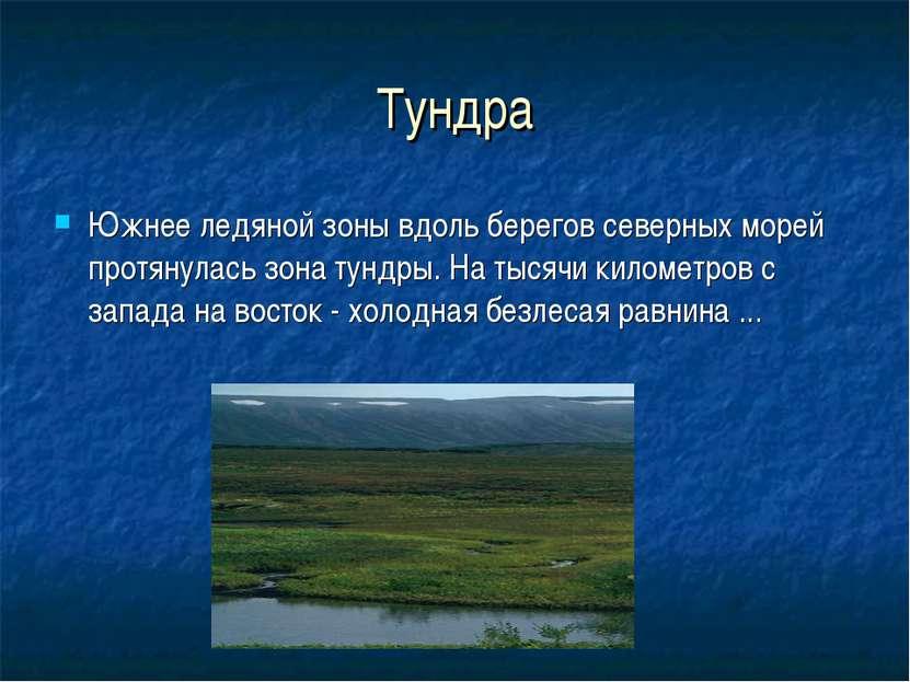 Тундра Южнее ледяной зоны вдоль берегов северных морей протянулась зона тундр...