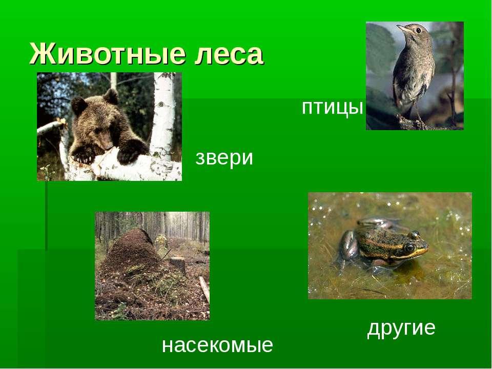 Животные леса звери птицы насекомые другие