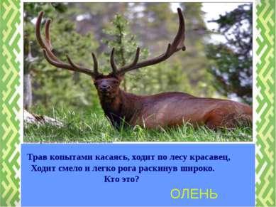 ОЛЕНЬ Трав копытами касаясь, ходит по лесу красавец, Ходит смело и легко рога...