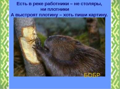 БОБР Есть в реке работники – не столяры, ни плотники А выстроят плотину – хот...