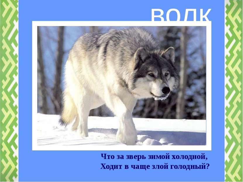 Что за зверь зимой холодной, Ходит в чаще злой голодный? волк