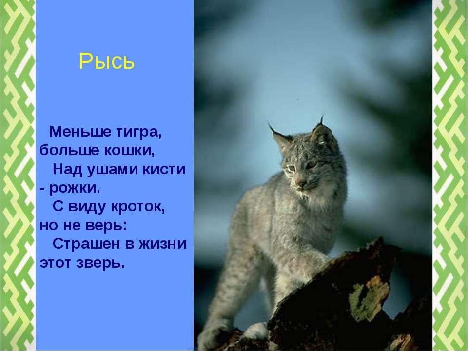 Меньше тигра, больше кошки, Над ушами кисти - рожки. С виду кроток, но не вер...