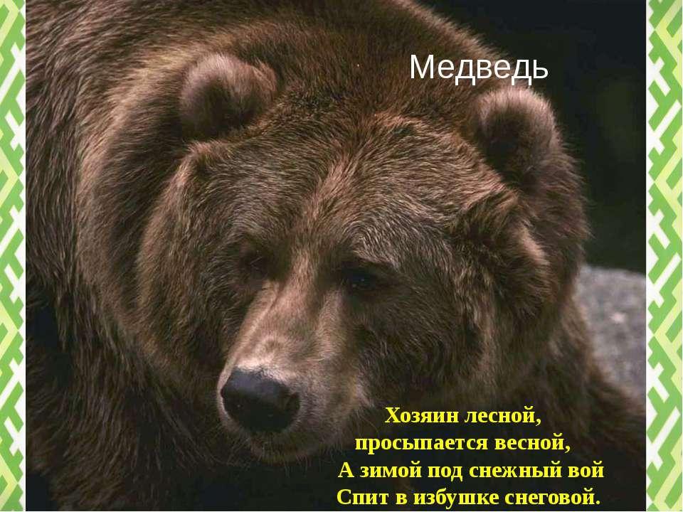 Медведь Хозяин лесной, просыпается весной, А зимой под снежный вой Спит в изб...