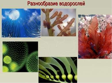 Разнообразие водорослей
