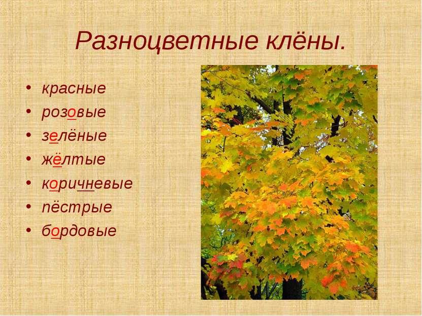 Разноцветные клёны. красные розовые зелёные жёлтые коричневые пёстрые бордовые