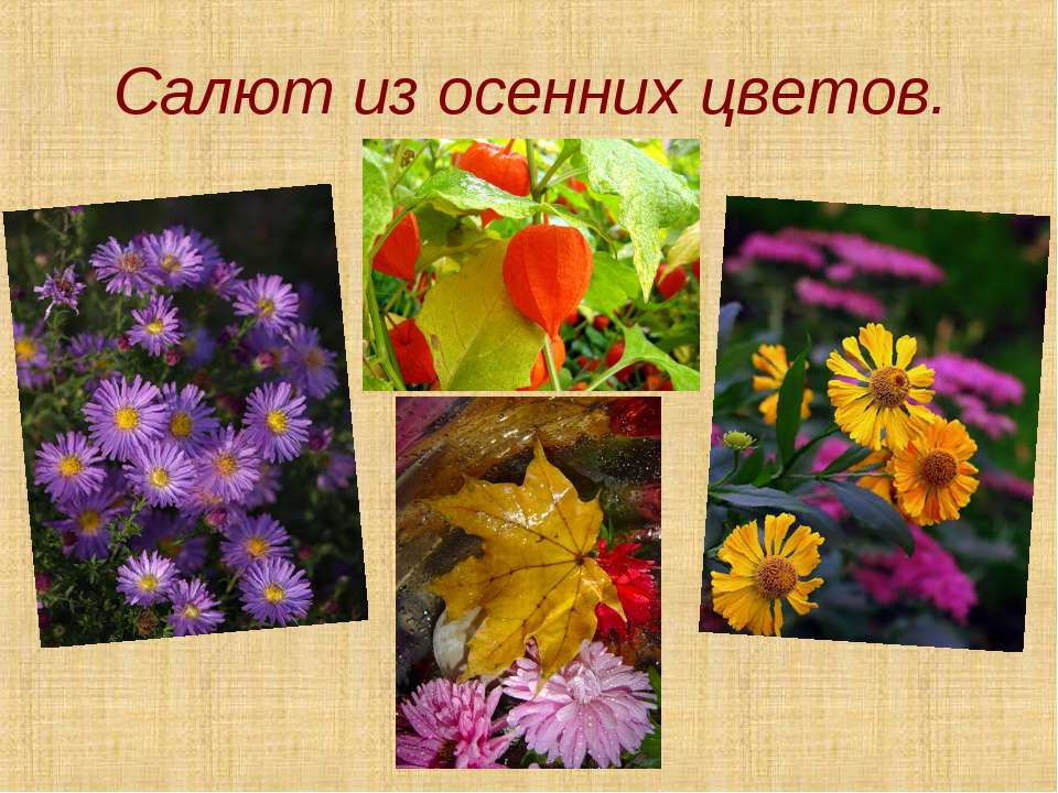 Салют из осенних цветов.