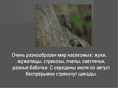 Очень разнообразен мир насекомых: жуки, жужелицы, стрекозы, пчелы, светлячки,...