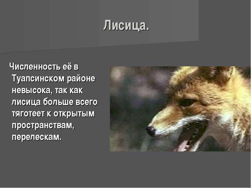 Лисица. Численность её в Туапсинском районе невысока, так как лисица больше в...