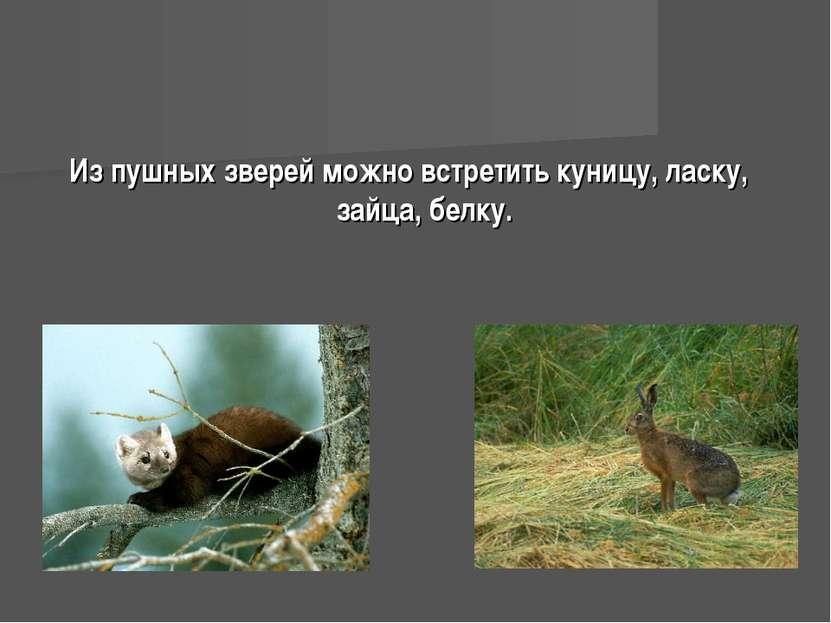 Из пушных зверей можно встретить куницу, ласку, зайца, белку.