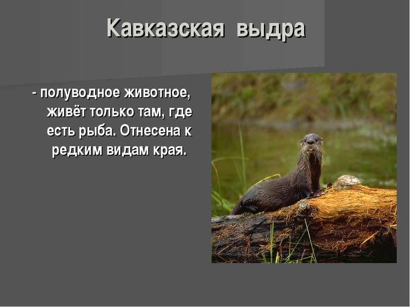 Кавказская выдра - полуводное животное, живёт только там, где есть рыба. Отне...