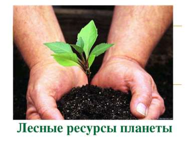 Лесные ресурсы планеты
