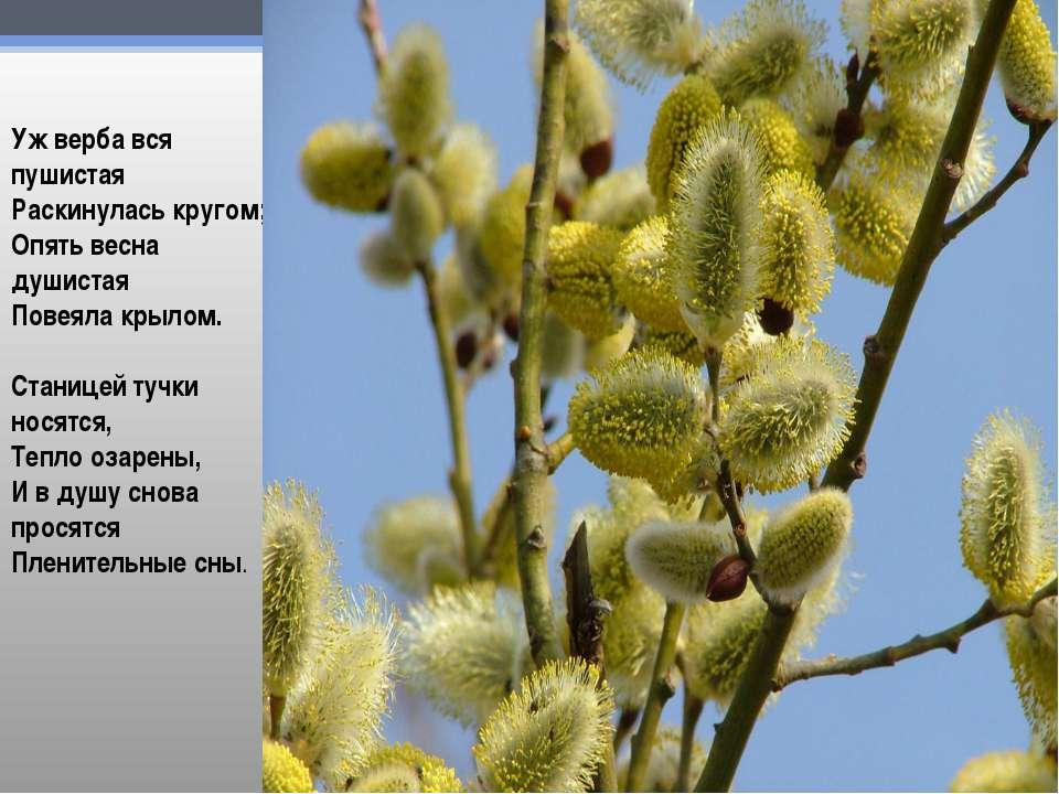 Уж верба вся пушистая Раскинулась кругом; Опять весна душистая Повеяла крылом...