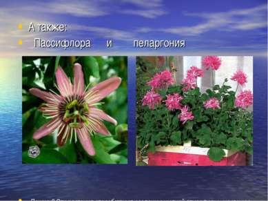 А также: Пассифлора и пеларгония Почему? Эти растения способствуют созданию у...