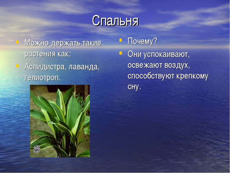 Спальня Можно держать такие растения как: Аспидистра, лаванда, гелиотроп. Поч...