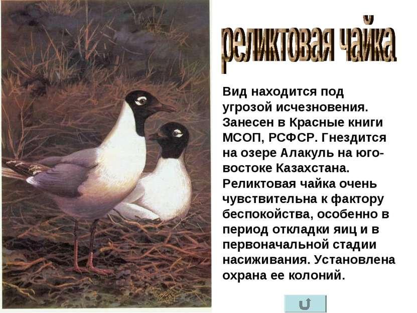 Вид находится под угрозой исчезновения. Занесен в Красные книги МСОП, РСФСР. ...