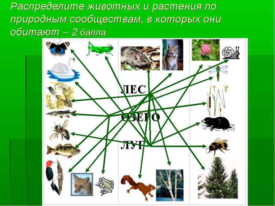 Распределите животных и растения по природным сообществам, в которых они обит...