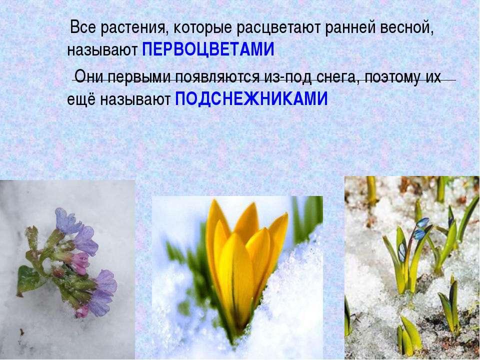 Все растения, которые расцветают ранней весной, называют ПЕРВОЦВЕТАМИ Они пер...