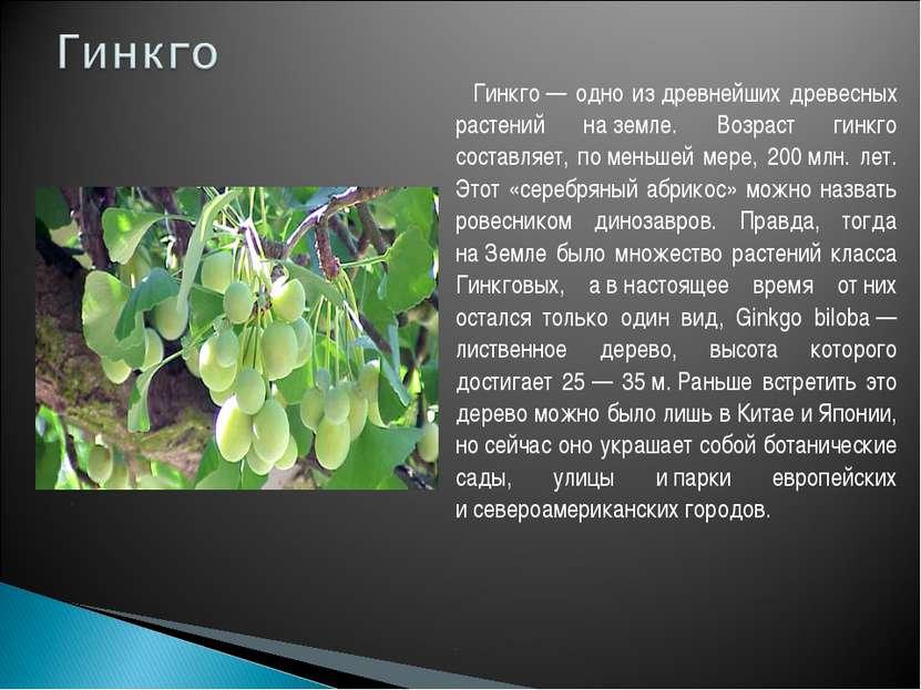 Гинкго— одно издревнейших древесных растений наземле. Возраст гинкго соста...
