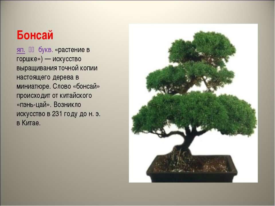 Бонсай яп. 盆栽 букв. «растение в горшке»)— искусство выращивания точной коп...