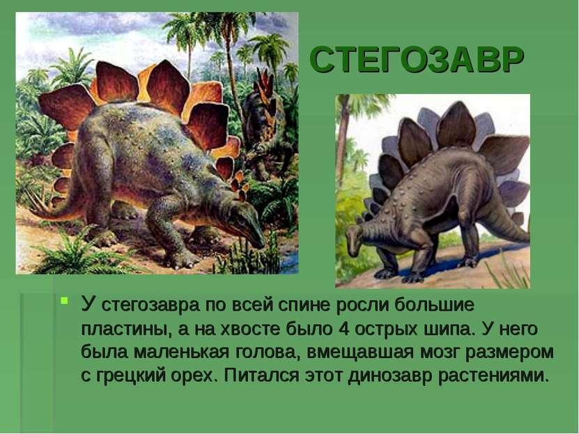 СТЕГОЗАВР У стегозавра по всей спине росли большие пластины, а на хвосте было...
