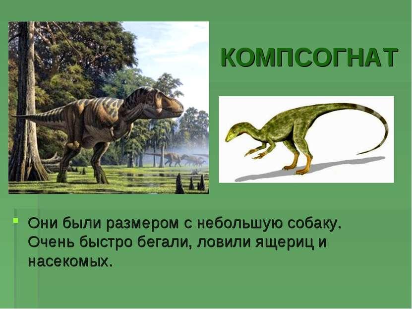 КОМПСОГНАТ Они были размером с небольшую собаку. Очень быстро бегали, ловили ...