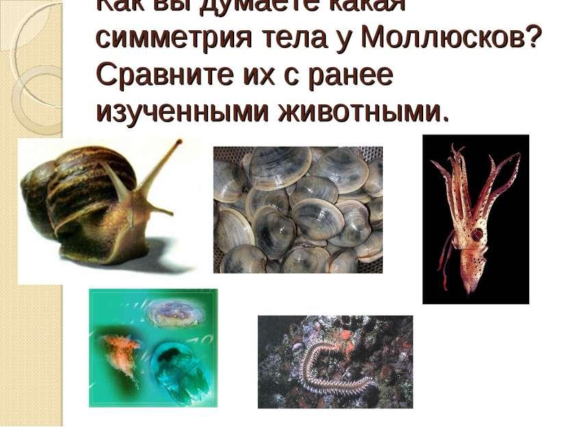 Как вы думаете какая симметрия тела у Моллюсков? Сравните их с ранее изученны...