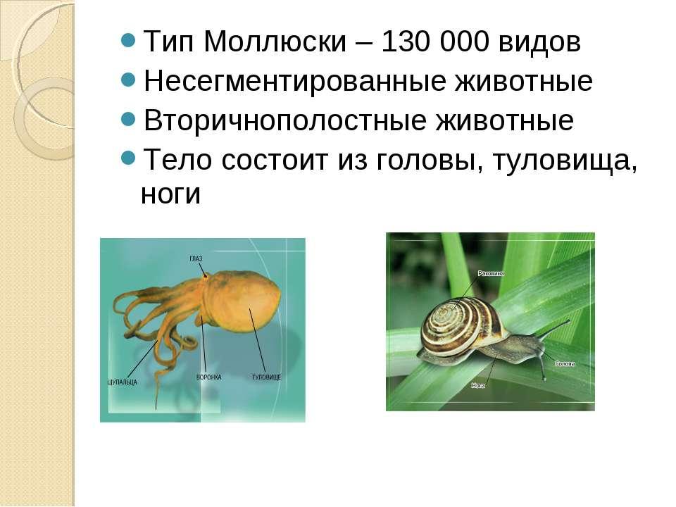 Тип Моллюски – 130 000 видов Несегментированные животные Вторичнополостные жи...