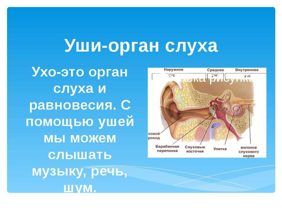 Уши-орган слуха Ухо-это орган слуха и равновесия. С помощью ушей мы можем слы...