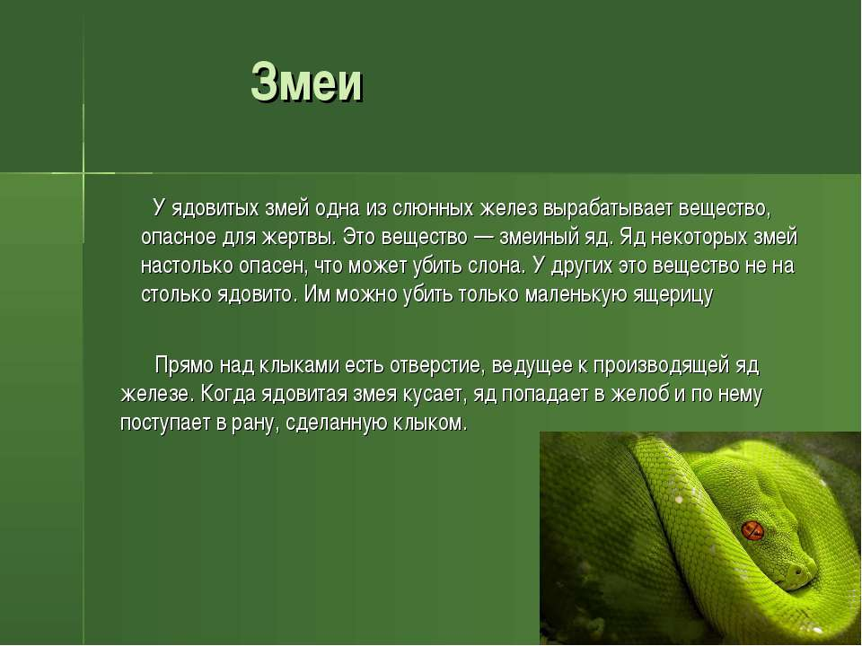 Змеи У ядовитых змей одна из слюнных желез вырабатывает вещество, опасное для...