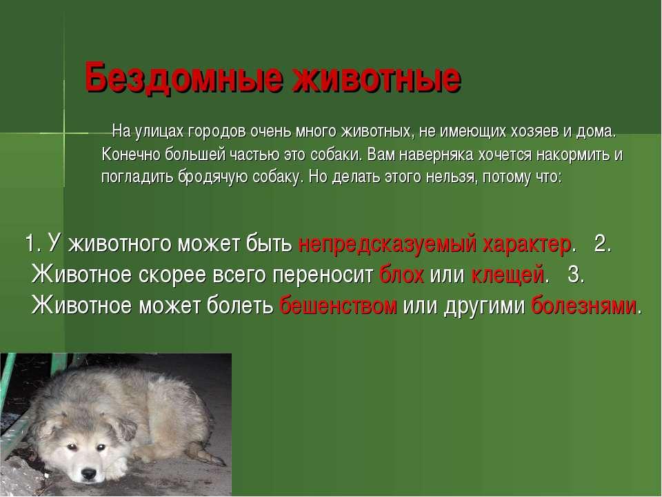 Бездомные животные На улицах городов очень много животных, не имеющих хозяев ...