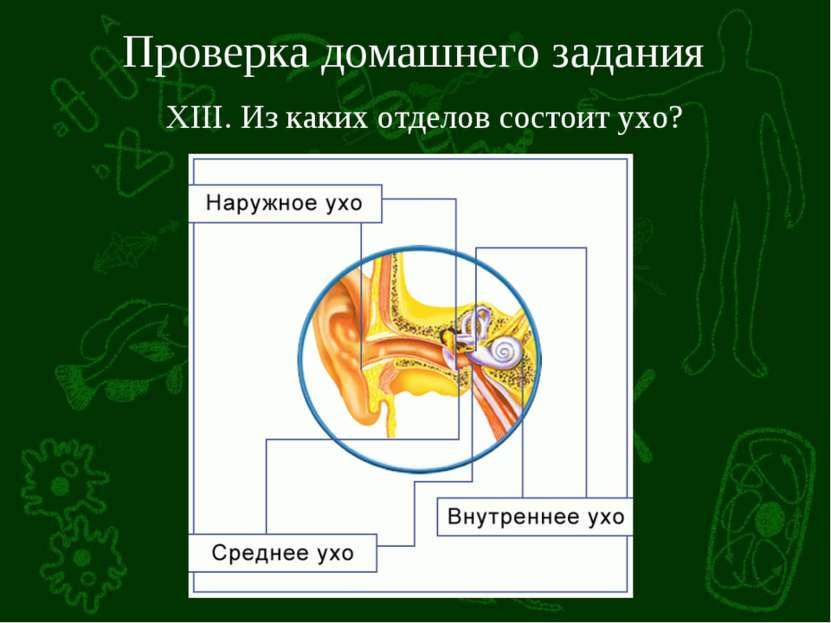 Проверка домашнего задания XIII. Из каких отделов состоит ухо?