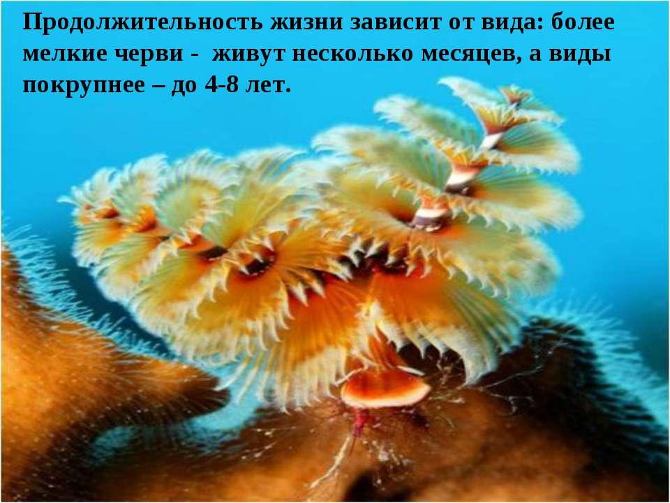 Продолжительность жизни зависит от вида: более мелкие черви - живут несколько...