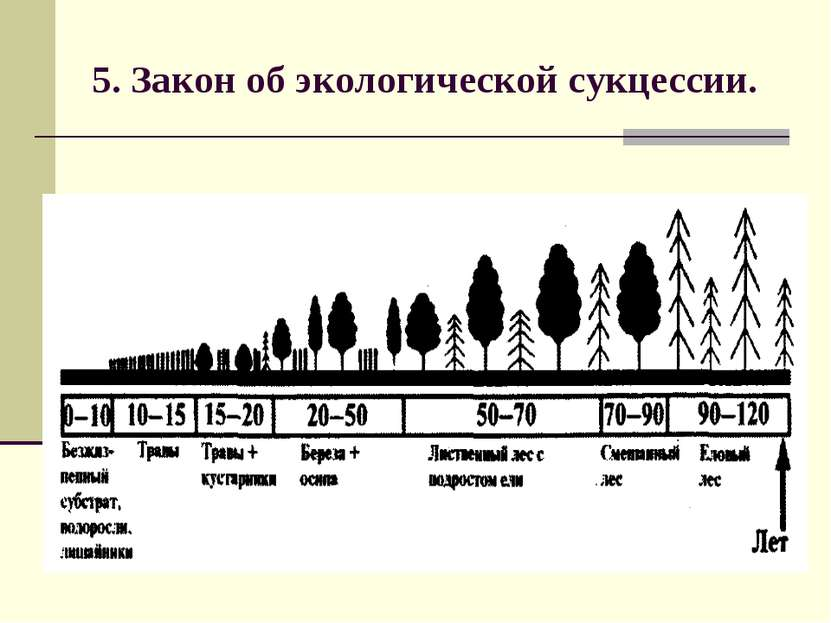 5. Закон об экологической сукцессии.