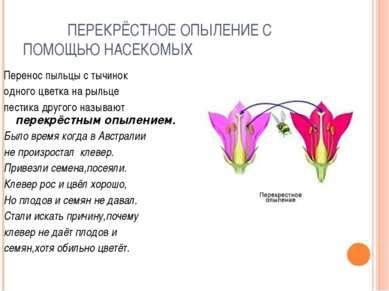 ПЕРЕКРЁСТНОЕ ОПЫЛЕНИЕ С ПОМОЩЬЮ НАСЕКОМЫХ Перенос пыльцы с тычинок одного цве...