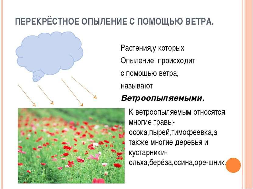 ПЕРЕКРЁСТНОЕ ОПЫЛЕНИЕ С ПОМОЩЬЮ ВЕТРА. Растения,у которых Опыление происходит...