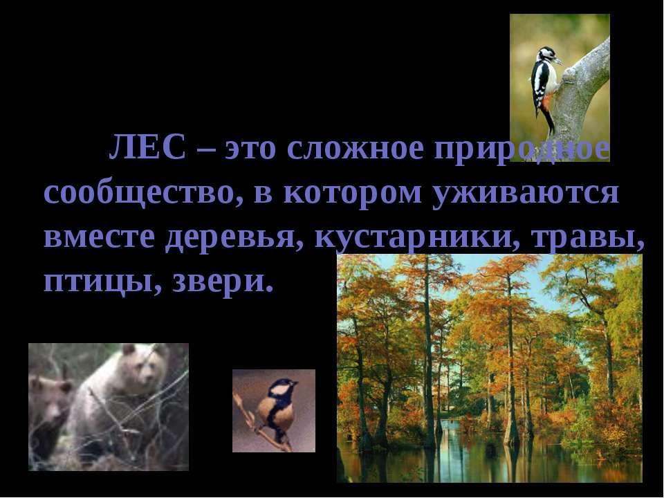 ЛЕС – это сложное природное сообщество, в котором уживаются вместе деревья, к...