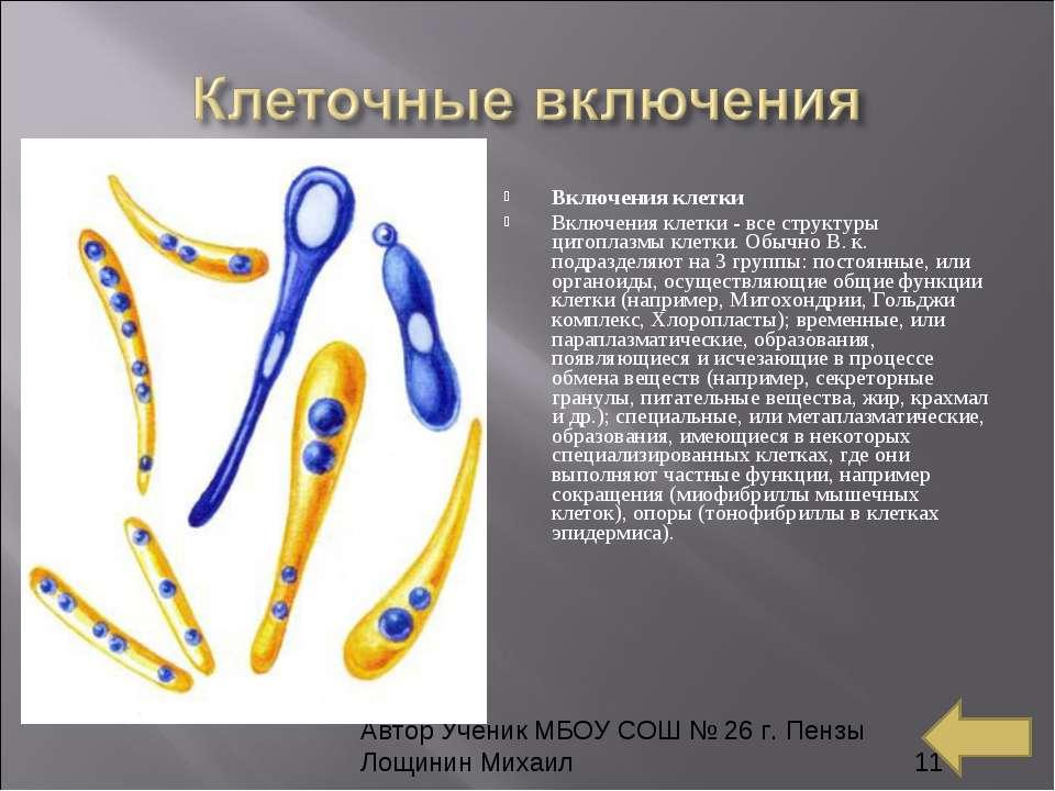 Включения клетки Включения клетки-все структуры цитоплазмы клетки. Обычно В...