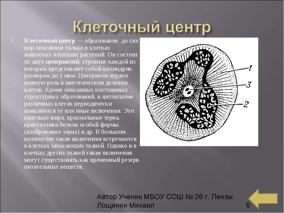 Клеточный центр— образование, до сих пор описанное только в клетках животных...