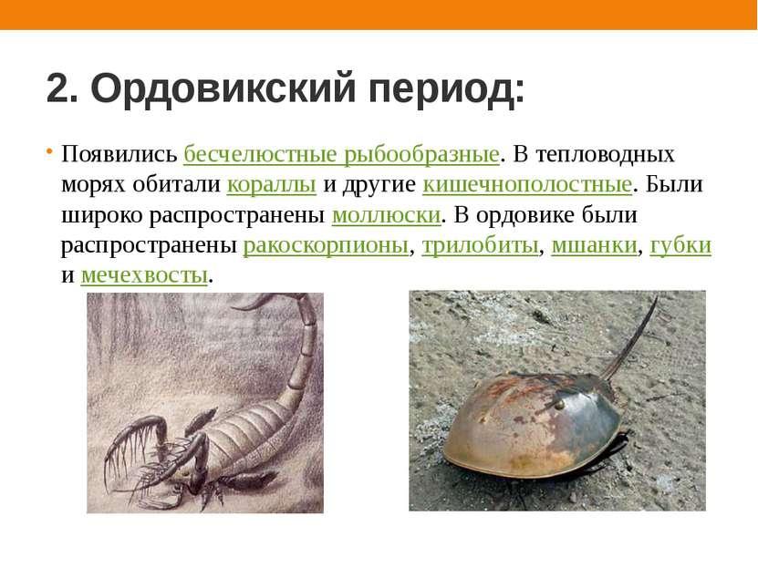 2. Ордовикский период: Появились бесчелюстные рыбообразные. В тепловодных мор...