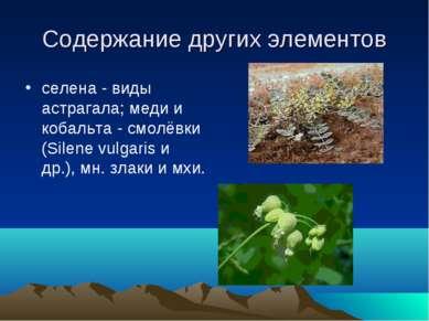 Содержание других элементов селена - виды астрагала; меди и кобальта - смолёв...