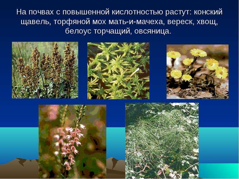 На почвах с повышенной кислотностью растут: конский щавель, торфяной мох мать...