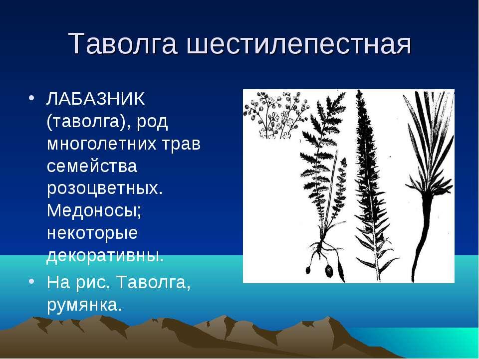 Таволга шестилепестная ЛАБАЗНИК (таволга), род многолетних трав семейства роз...
