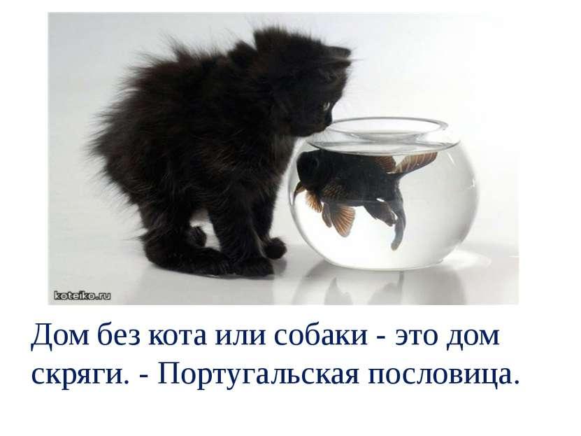 Дом без кота или собаки - это дом скряги. - Португальская пословица.